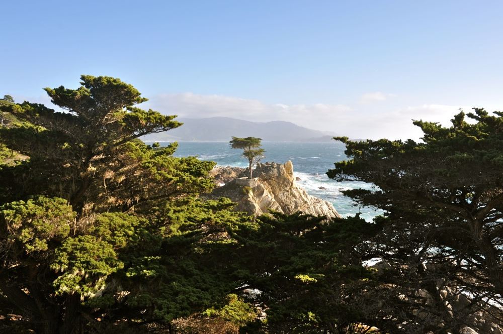 The Lone Cypress, California