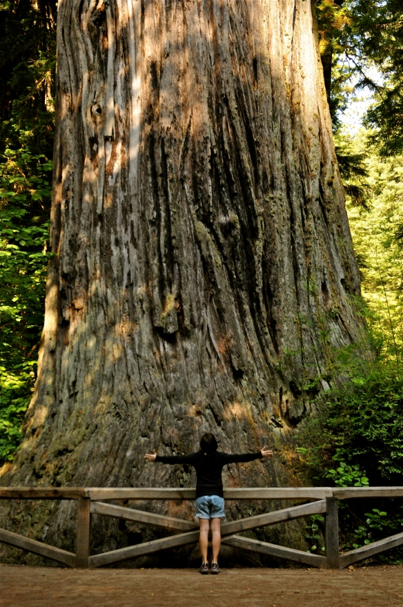 Feeling small. Big Tree, Redwood National Park, CA