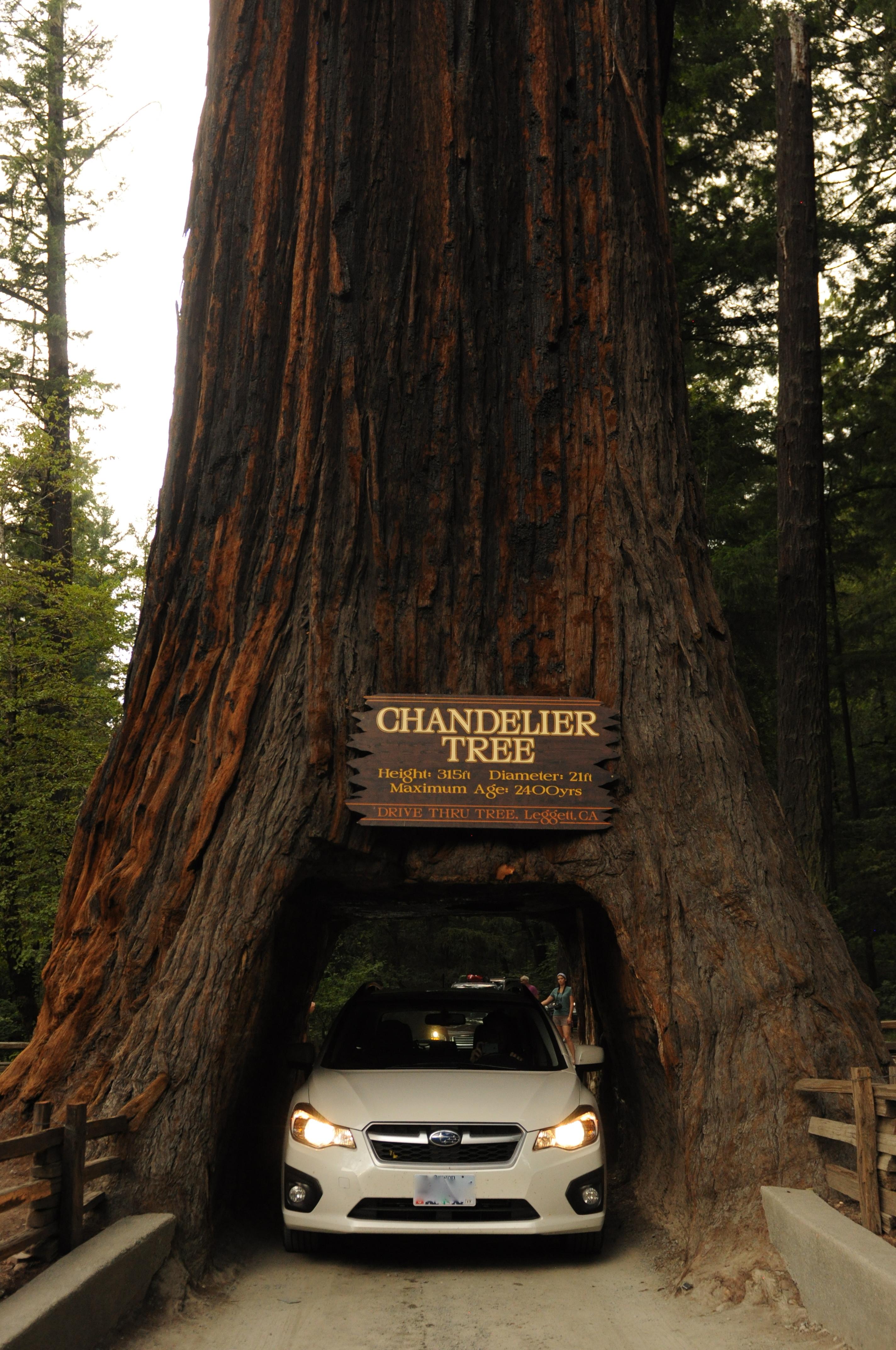 California those dam americans drive thru tree arubaitofo Gallery