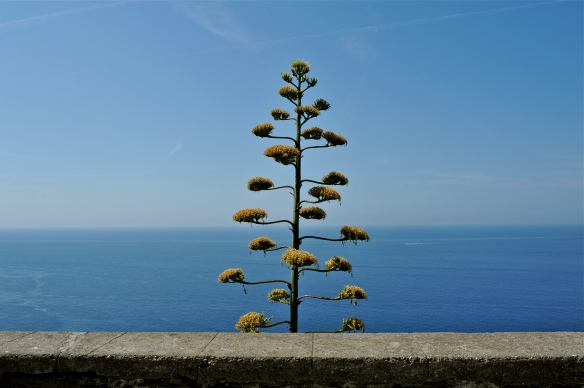 happy tree in Corniglia